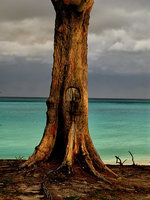 bahamas, north bimini, spook hill beach, tree, mystical,