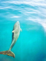 Dolphins Ascending