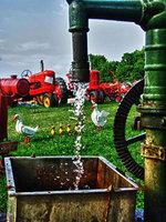 kutztown, pennsylvania, farm, ducks, water, funny,
