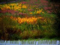 birdsboro, pennsylvania, milkweed, pasture,