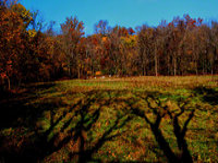 kutztown, pennsylvania, goats, shadows,