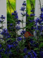 pennsylvania, quakertown, butterfly, bee, flower, spirit,