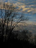 pennsylvania, quakertown, golden eagle, bird, tranquility,