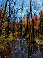 pennsylvania, east rockhill township, rock hill road, wetlands,