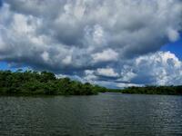 florida, sanibel island, j.n. ding darling wildlife refuge, mangrove,