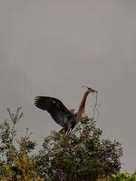 fort meyers, florida, bird, tree,