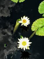 Lotus In Sky