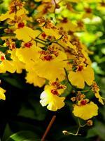 Orchids Abound