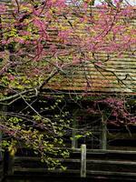 Spring At Hunters Cabin