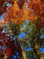 Fall Jubilee