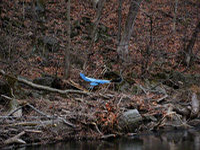 Blue River Edge