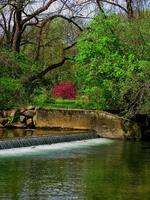 Spring At The Old Dam