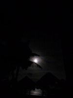 Tropical Moonlit Night