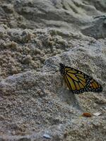 new jersey, sandy hook state park, gunninson beach, butterfly, ocean,