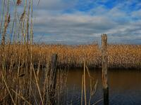 oceanville, new jersey, salt marsh, winter,  estuary,