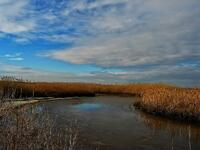 new jersey, oceanville, edwin b forsythe national wildlife refuge, exploration,