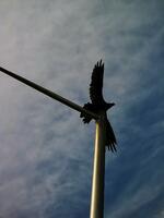 pennsylvania, haycock, turkey vulture, east,