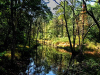 pennsylvania, haycock, dimple creek, bridge,