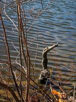 pennsylvania, haycock, bird, wood,