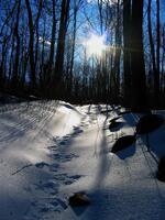 pennsylvania, haycock, snow, ice, trail,
