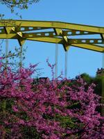 pennsylvania, pittsburgh, fort pitt bridge, point state park, mt washington, flowering tree,