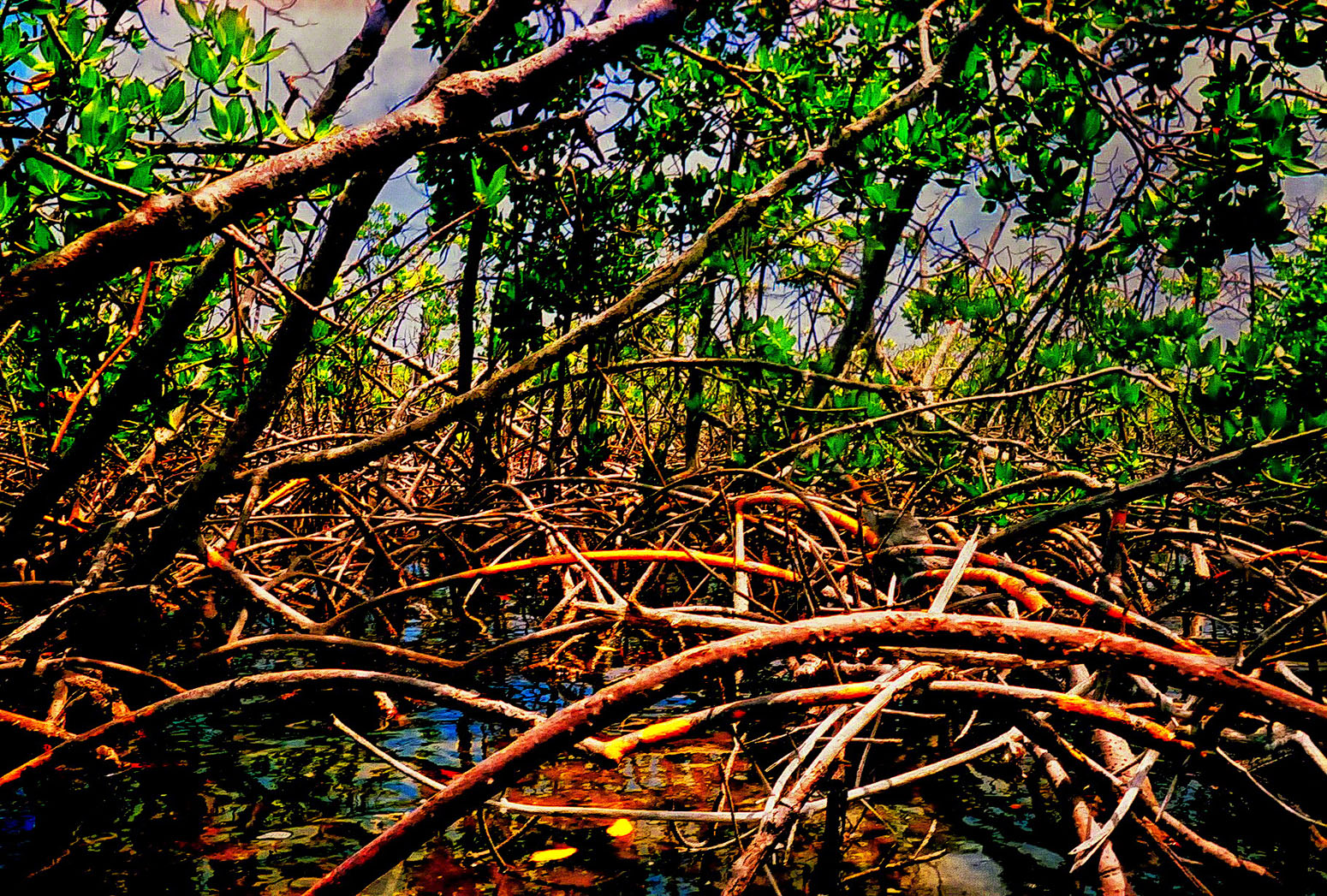 A fresh water sulphur spring located in Bonefish Creek, and deep in the salt water Mangrove Swamp lies the curative waters of...
