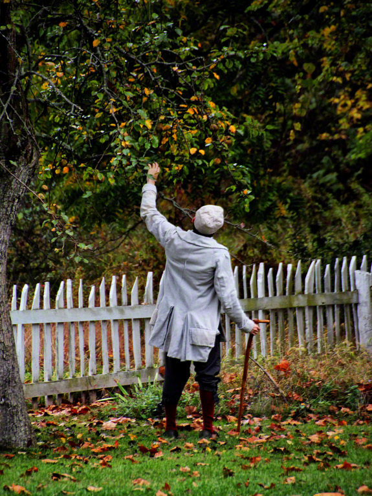 birdsboro, pennsylvania, mysterious, person, apple, harvest,, photo