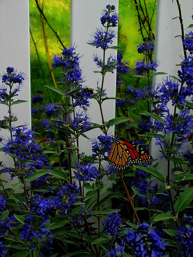 """The Butterfly and Bee share this flower in honor of a spirit named  """"Buddy""""."""