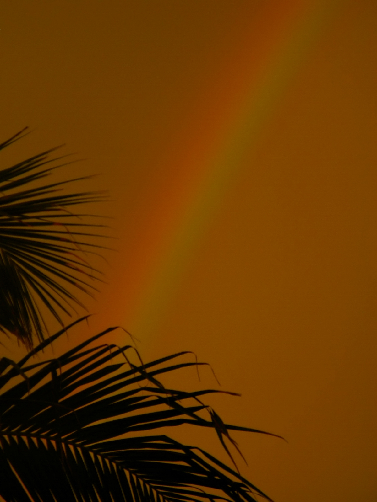 The Sunsets golden rays provided background for the rainbow.