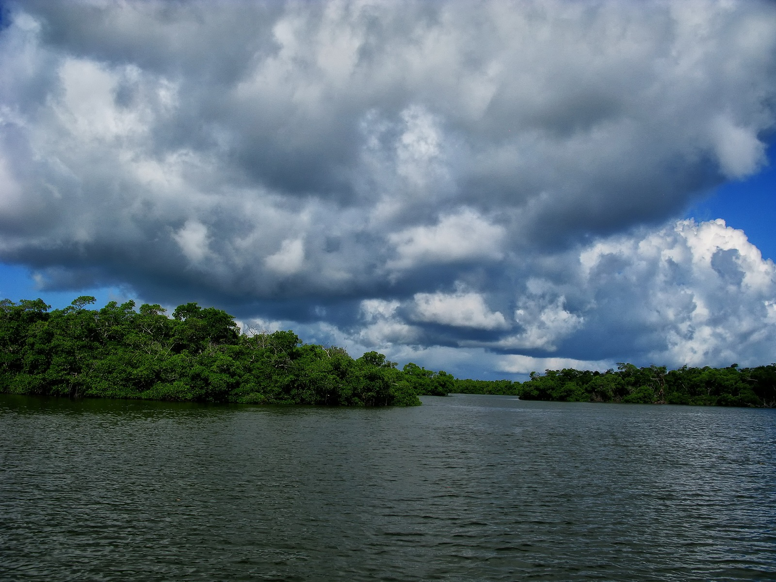 florida, sanibel island, j.n. ding darling wildlife refuge, mangrove,, photo