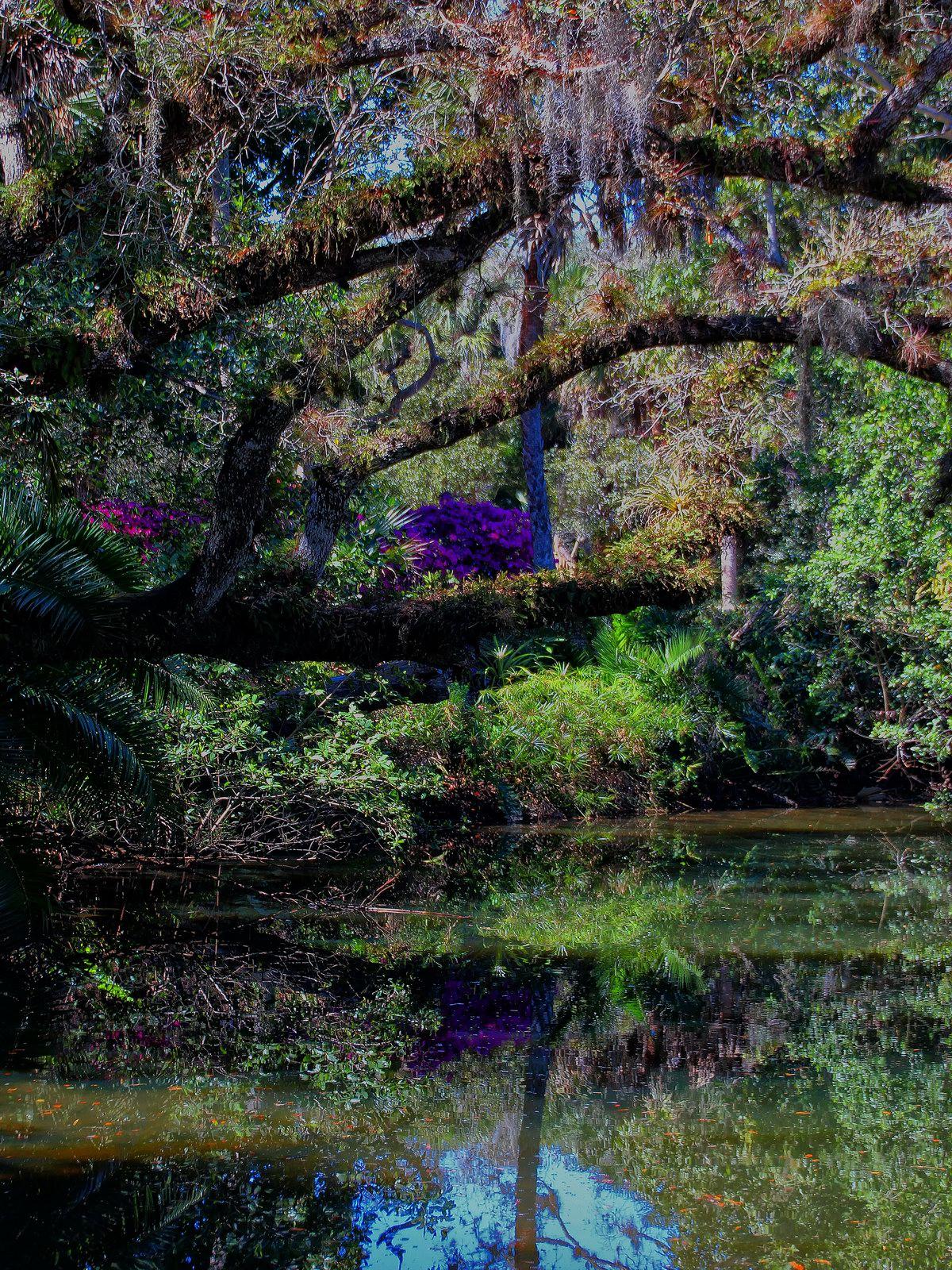 estero, florida, estero river, flowers, morning, spring,, photo