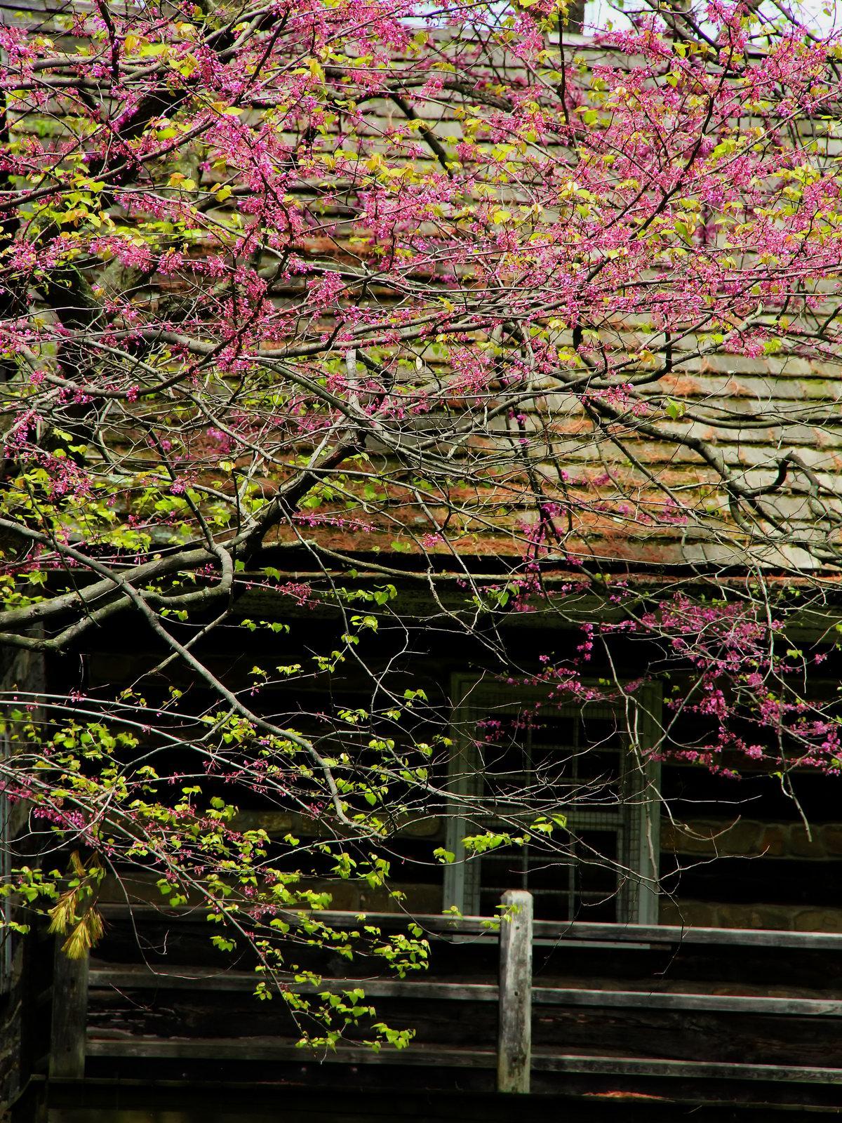 pennsylvania, allentown, spring, hunters cabin, abraham kirper,, photo