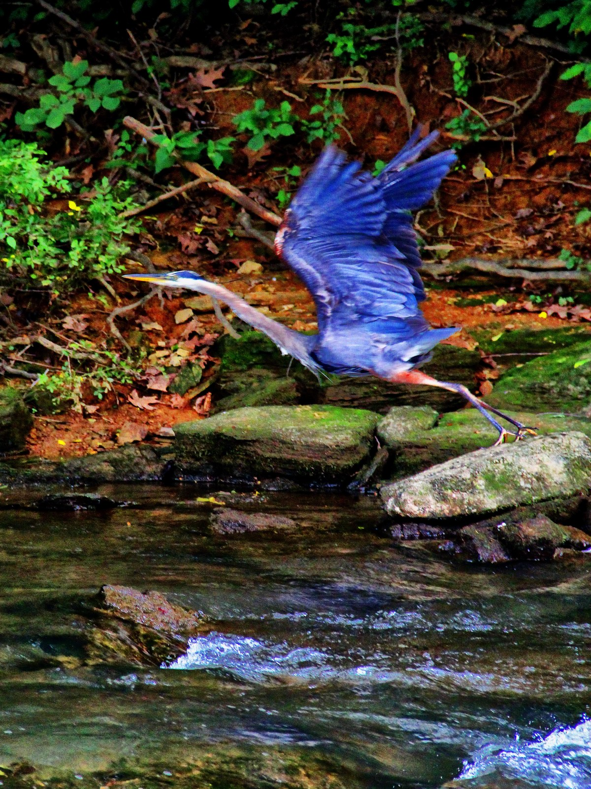 pennsylvania, allentown, great blue heron, feet, ground, mind, clouds,, photo