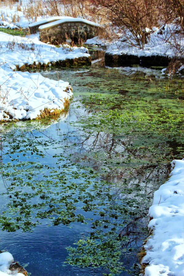 In search of color during a long winter, this natural spring offered a sanctuary of color.