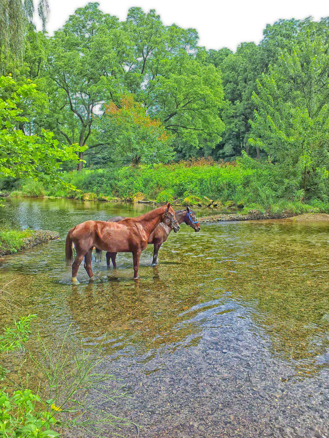 pennsylvania, allentown, horses, park, trails, drink, , photo