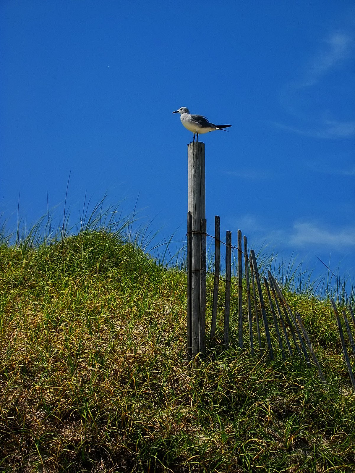 new jersey, island beach state park, seagull, beach,, photo