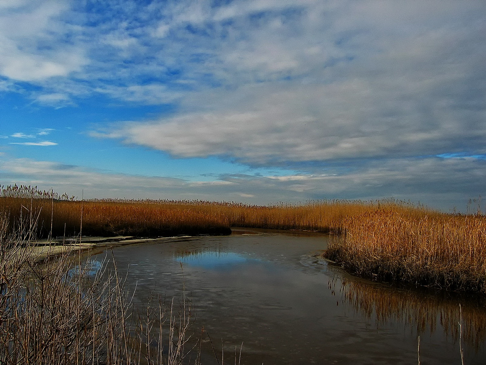 new jersey, oceanville, edwin b forsythe national wildlife refuge, exploration,, photo