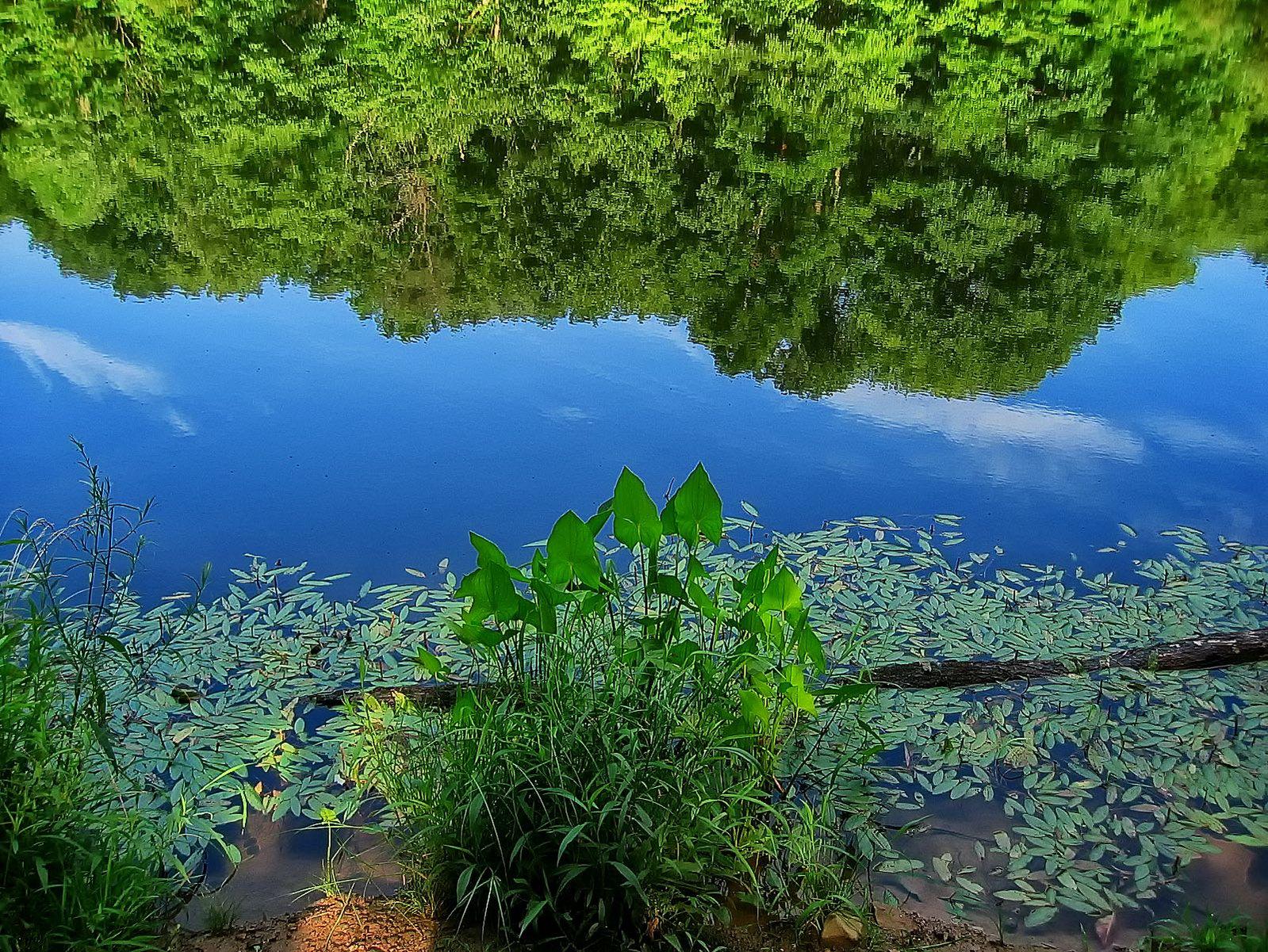 pennsylvania, haycock, fringe, reflection, , photo