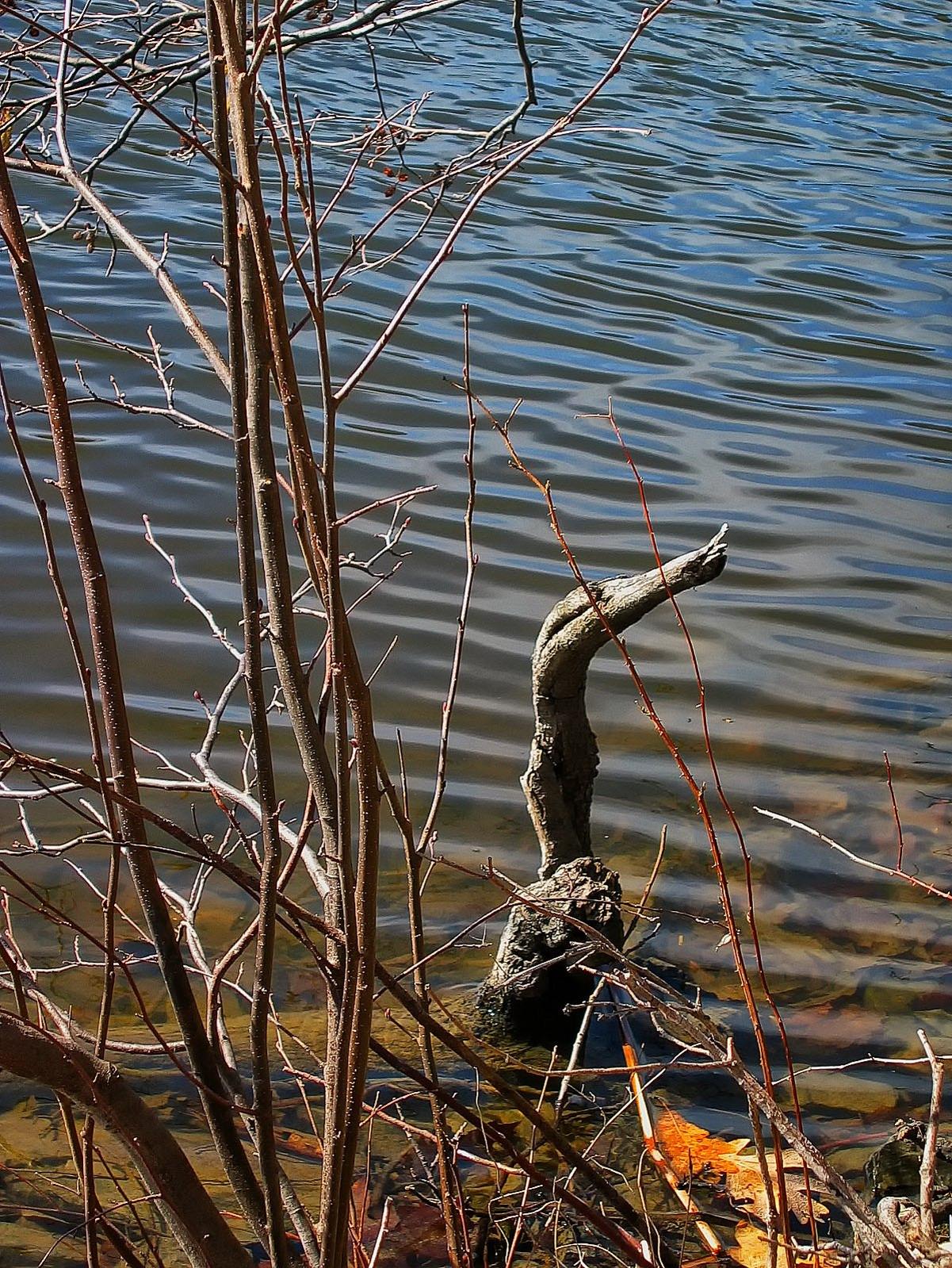 pennsylvania, haycock, bird, wood, , photo