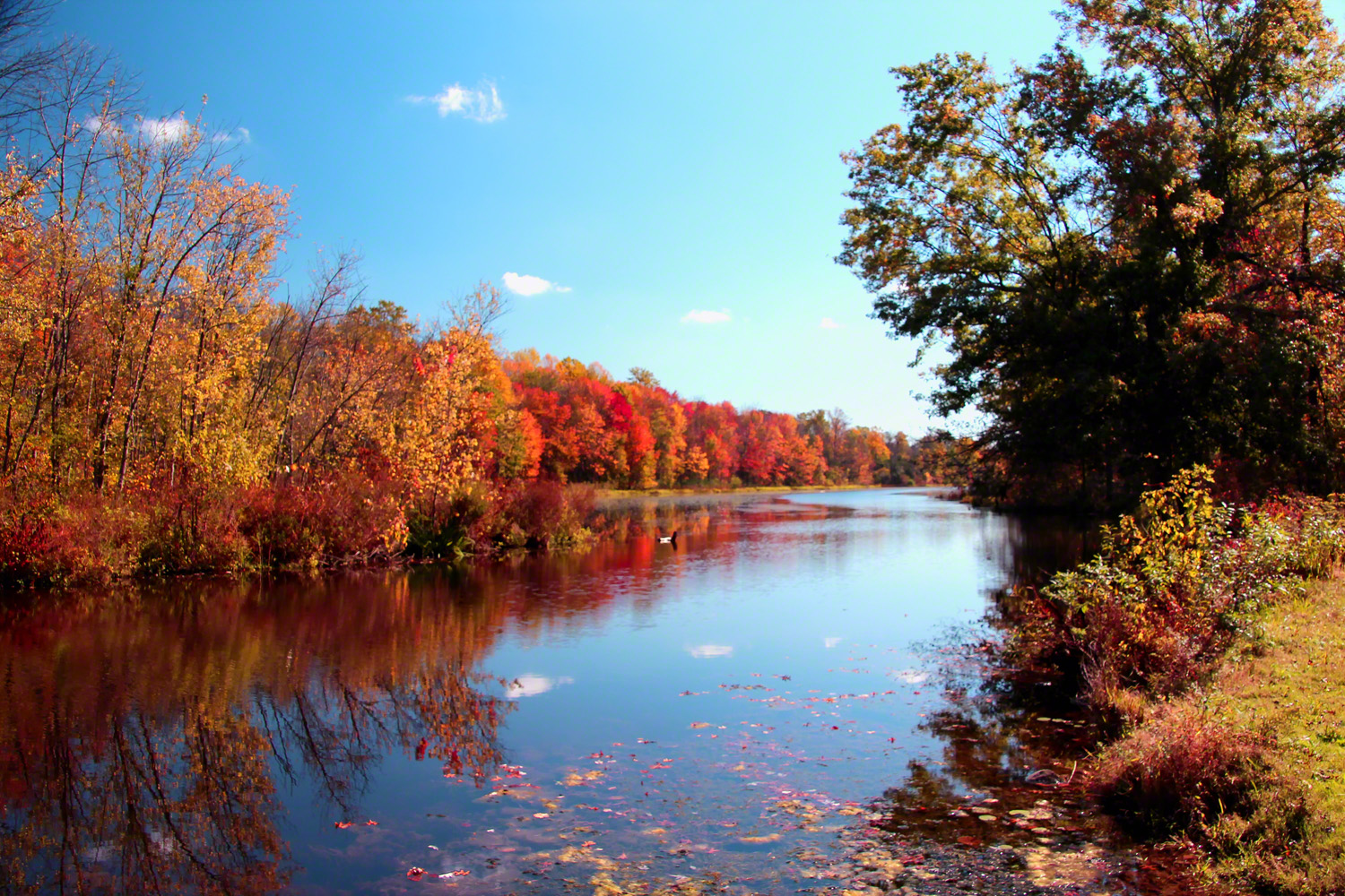 pennsylvania, haycock, haycock run, fall, colors, lake, , photo
