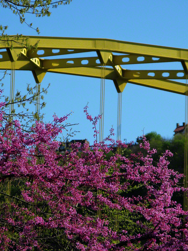 With Mt.Washington in the background, the Fort Pitt Bridge adds more color to the flowering trees in Point State Park.
