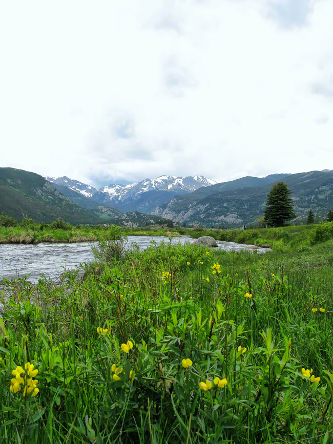 Water melting from the high altitude glaciers quickly flows past the blooming wildflowers.