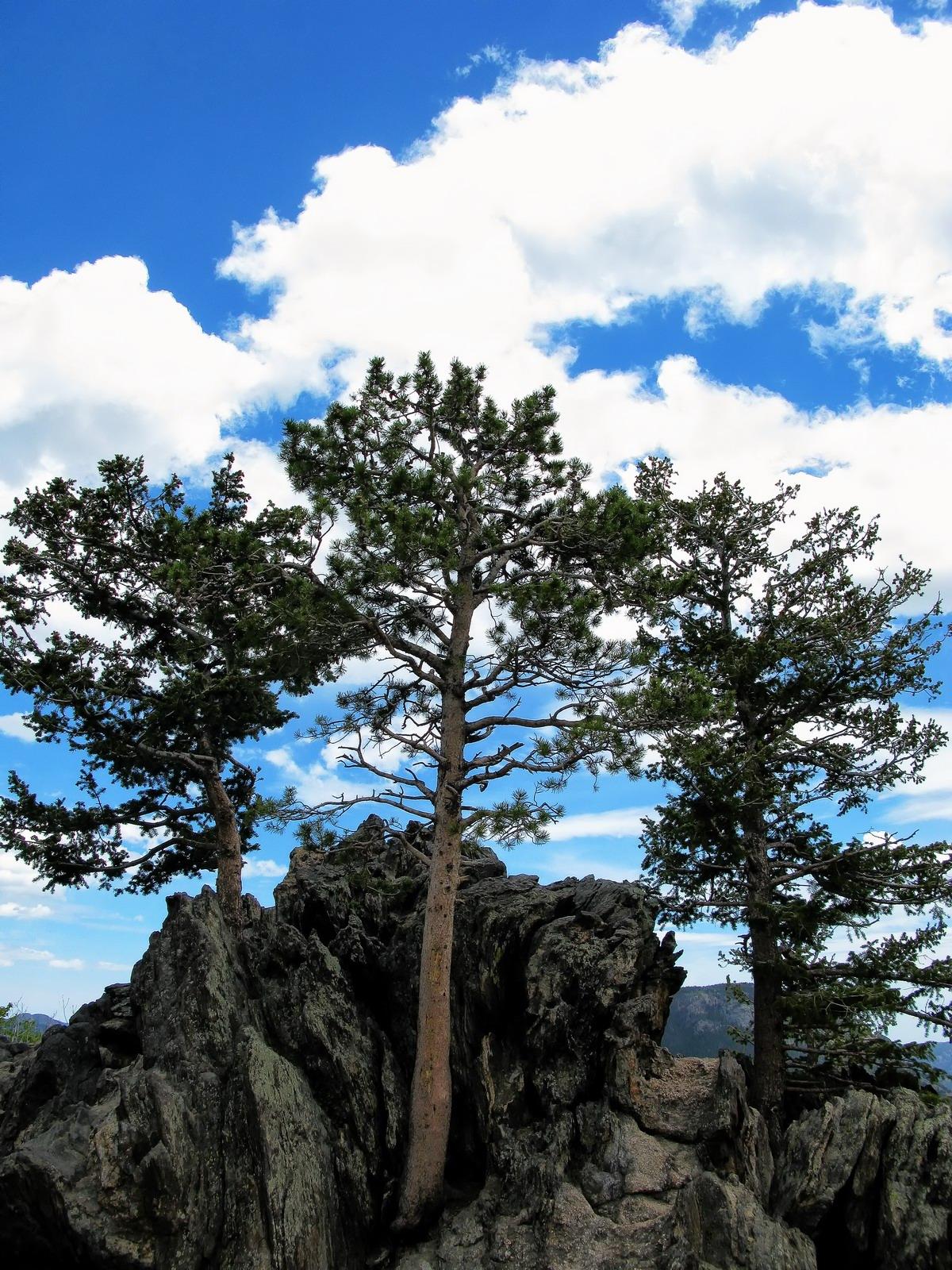 colorado, rocky mountain national park, mountaintop, trees, , photo