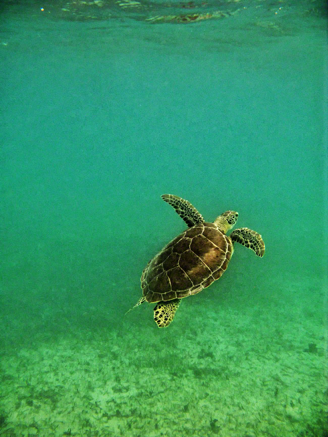 This little guy spotted us, and swam towards the waters surface.