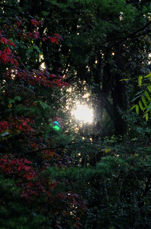 allentown, pennsylvania, little lehigh creek, sunrise, walk, , photo