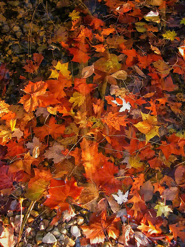 One of my favorites is Fall Hologram. The stick in the image appears to float between layers.