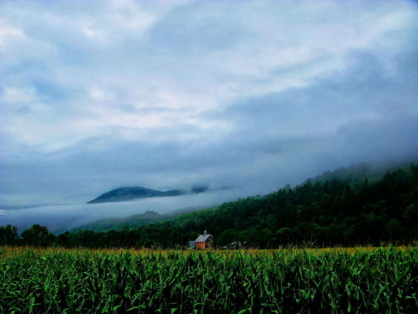 vermont,  granville, fog, corn, sun, mountaintops, morning, , photo