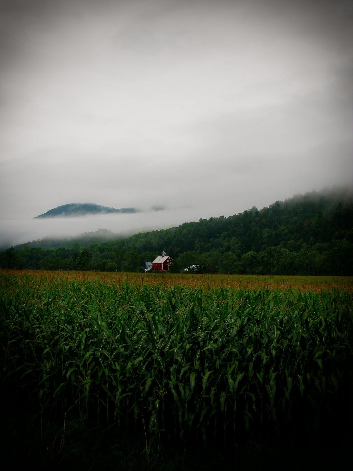 vermont, granville, morning, barns, , photo